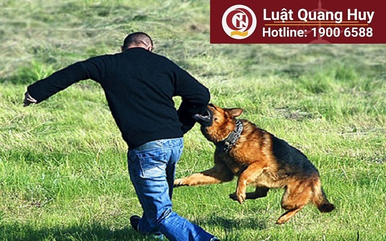 Bồi thường thiệt hại khi bị chó cắn