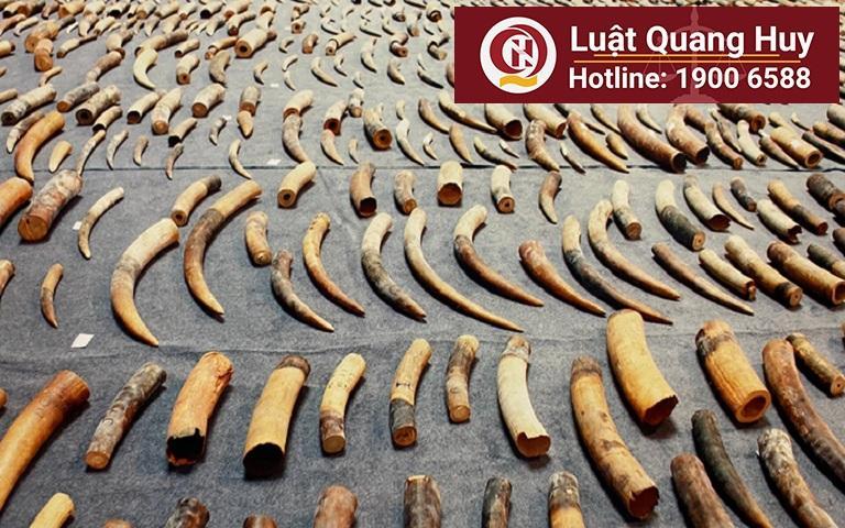 Khung hình phạt của tội buôn bán ngà voi và sừng tê giác trái phép